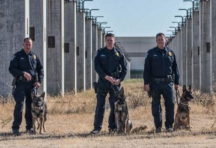 Picture of Officer Davis and K9 Blitz, Officer Shoberg and K9 Axel, Officer Culver and K9 Jack